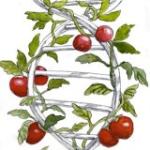 veggies and telomeres